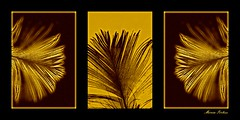 """Hope is the thing..."" (Marcia Portess-Thanks for a million+ views.) Tags: art photomanipulation contemporaryart digitalart feathers artedigital triptychs elarte marciaportess hopeisthething feathertriptych"