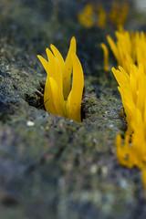09/01/2014 (Sebastian Freitag) Tags: macro nature 365