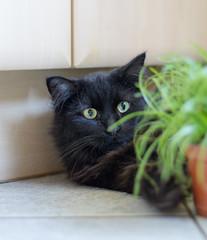Kenji (wpt1967) Tags: cat canon eos eyes d katze mm augen 50 schwarz kater 1100 wpt1967