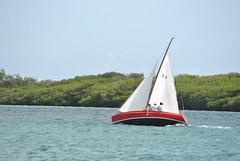 DSC_6017 (eric15) Tags: beach race cat surf sailing wind offshore competition surfing racing aruba international catamaran sail windsurfing regatta optimist sunfish 2014