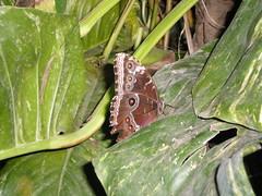 2008-10-18 Tropical Wings _69 (Velda Tiger Lily Varney) Tags: camera pentax compact cameraequipment pentaxoptiol30 brandmain