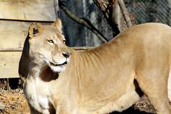 2010-12-15 Sheba (16)
