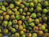 Appels en peren plukken