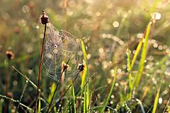 spiderweb in the morning (StefleiFotografie) Tags: morning light nature wet grass sunrise spider drops bokeh spiderweb meadow drop dew throughthelookingglass flickrfriday altweibersommer flickrchallengegroup flickrchallengewinner