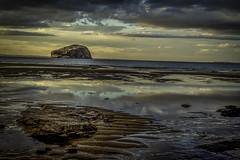 Bass Rock Reflections (Evo800) Tags: 50mm scotland nikon north east seacliff berwick lothian d610