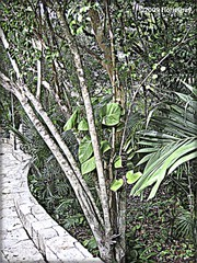 3211938104_1fc7281fc2_o (gray.florie) Tags: allrightsreserved usewithoutpermissionisillegal ©2009florencetomasulogray florencegray floriegrayflorencetomasulograytomasulofloriegrayfloriegraycom