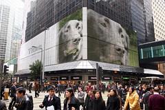 "PhotoFunia Creation:  ""Billboard Dog"""