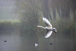 Vol dans la brume.