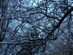 IMG_2187 (augiebenjamin) Tags: winter provocanyon mountains orem provo lindon utah snow clouds trees sky byu brighamyounguniversity art