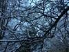 IMG_2187 (August Benjamin) Tags: winter provocanyon mountains orem provo lindon utah snow clouds trees sky byu brighamyounguniversity art