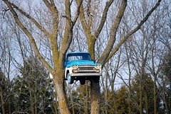 Chevy Pickup in a tree, Clinton Wisconsin (Cragin Spring) Tags: wisconsin wi midwest unitedstates usa unitedstatesofamerica pickuptruck pickup tree clinton roadside clintonwi clintonwisconsin chevy chevrolet chevypickup