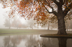 4001 Greenwich Park Boating Pond (andy linden) Tags: 4001 greenwich park boating pond london trees fog