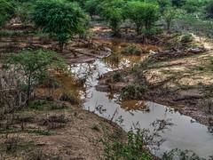 Água no sertão (felipe sahd) Tags: sertãodecrateús independência ceará brasil nordeste semiárido caatinga água rio