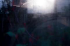 Reflection and transparency (Yuta Ohashi LTX) Tags: reflection transmission glass light penetrate passlightthrough flower dark 反射 透過 ガラス 植物園 温室 greenhouse botanicalgarden transparency