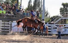 P3110258 (David W. Burrows) Tags: cowboys cowgirls horses cattle bullriding saddlebronc cowboy boots ranch florida ranching children girls boys hats clown bullfighters bullfighting