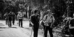 Test of the human spirit (gunman47) Tags: b bw bound mono monochrome obs outward pulau sg sepia singapore ubin w black endurance expedition hike hiker hiking human school spirit tired trip walking white young