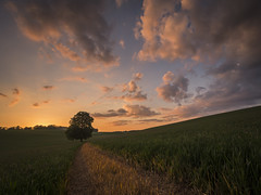 Alone (Damian_Ward) Tags: sunset tree field landscape lumix evening countryside track sundown path olympus panasonic trail maze