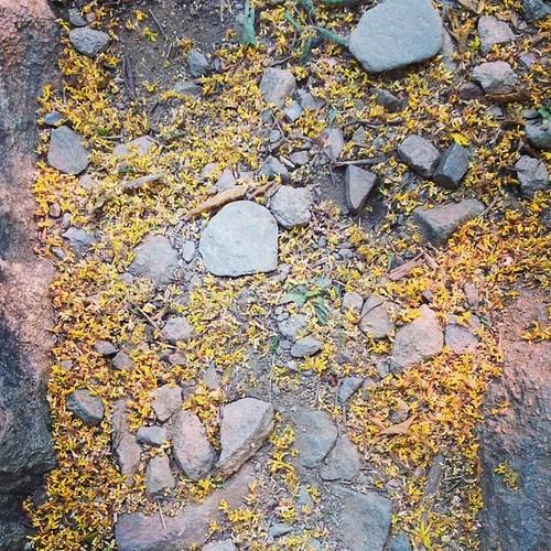 山上的小黄花,落了一地