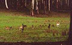 0 Packers Swamp Road, Nimmitabel NSW