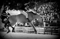 Un tiento (Eduardo Amorim) Tags: horses horse southamerica caballo uruguay cheval caballos cavalos prado montevideo pferde cavalli cavallo cavalo gauchos pferd hest hevonen chevaux gaucho 馬 américadosul beijos montevidéu häst uruguai gaúcho 말 amériquedusud лошадь gaúchos 马 sudamérica suramérica américadelsur סוס südamerika jineteada حصان άλογο americadelsud gineteada ม้า americameridionale semanacriolla semanacriolladelprado eduardoamorim ঘোড়া
