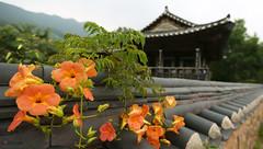 Korea_Korail_Temple_Stay_79 (KOREA.NET - Official page of the Republic of Korea) Tags: korea  templestay hanok korail        hadonggun    houseofchoechampan