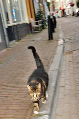 kat-in-de-stad (Don Pedro de Carrion de los Condes !) Tags: de kat utrecht stad donpedro museumkwartier zelfbewust