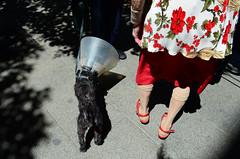 (csamperezbedos) Tags: madrid dog chien rouge oldlady streetphoto dame bas jambes abatjour chaussettes