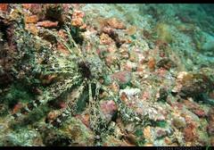 AN-15 (Rawbean Laden) Tags: uw thailand scuba scubadiving marinelife aonang underwaterphotography aonangislands