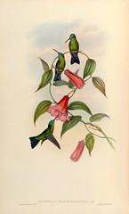 Anglų lietuvių žodynas. Žodis bellflower family reiškia bellflower šeimos lietuviškai.