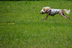 "LuLu Airborne Going For That FLAG • <a style=""font-size:0.8em;"" href=""http://www.flickr.com/photos/96196263@N07/14696162880/"" target=""_blank"">View on Flickr</a>"