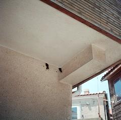 (christina chigrinova) Tags: summer 120 6x6 analog bulgaria swallow 90mm yashica sozopol a