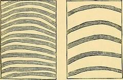 Anglų lietuvių žodynas. Žodis characteristic curve reiškia charakteristikos kreivė lietuviškai.
