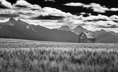 Barn and Barley Take 2 (Seth McCue) Tags: blackandwhite bw mountains barley barn rural landscape farm olympus omd em5 zuiko17mmf18
