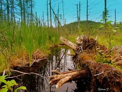 Moose country (Yolanta Z) Tags: country moose stagathe