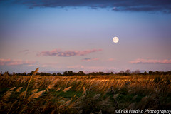 Moonrise over the Wheat (jpepmont1) Tags: moon wheat moonrise