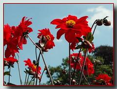 Blumen im Schlossgarten ... (Kindergartenkinder) Tags: park blumen schloss wasserburg anholt kindergartenkinder