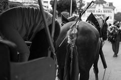 pattern (samsonpix) Tags: horse hair pattern bracelet shape horsehair