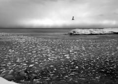 2014-01-25 14.05.05 bw (gordandlee) Tags: lake ice thebeach 2014