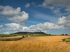 Sunshine at Scrabo (explored) (Getty listed) (Alan10eden) Tags: summer barley canon landscape spring scenery bright farm cereal bluesky crop fields northernireland farmer 1770 ulster 413 countydown scrabotower arable comber tillage 2stopgrad