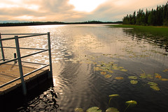 Waterlily (Josiane D.) Tags: trees light sunset river waterlily yukon pontoon