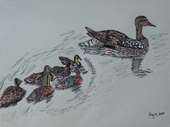 Mallard Family Sketch (miggsgreene) Tags: family summer lake pen pencil ink sketch mallard saskatchewan nemeiben