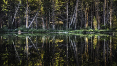 Morning Reflections (Team Tids) Tags: mountain lake reflection sunrise alpine pines sierras nikkor sierranevada trumbulllake nikond7000 teamtids
