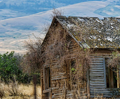 (Pattys-photos) Tags: old house vines decayed