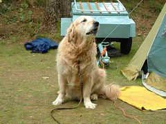 mot-2002-riviere-sur-tarn-26-pg-52-dog_800x600
