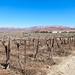 Grape farms of Aussenkehr, Namibia