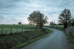 Country sunset (Molle William) Tags: road sunset france tree green nature forest photography 50mm photo nikon europe country loire 50mmf14 d800 nikond800 saintnizierdefornas lestropi