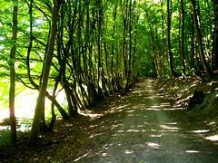 Die Nacht ist nun verschwunden (amras_de) Tags: las les forest selva bosque skog bos wald floresta mets fort silva mets bosc foresta skov baso orman erdo skgur uma padure gozd foreste arbaro mikas mes bsch bsc foraois guddefi
