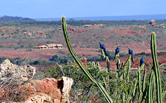 Lears Macaw Reserve