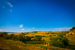 Colline toscane (wildfox76) Tags: travel holiday hills tuscany montepulciano toscana viaggi arezzo italiane castiglion bellezze italianbeauty collinetoscane fibocchi