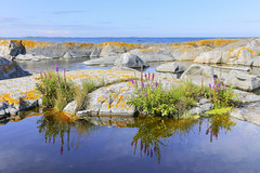 Trnskr (Anders Sellin) Tags: sea water island sweden stockholm baltic sverige summerpalace vatten archipelago sommar skrgrd  klippor skr trnskr